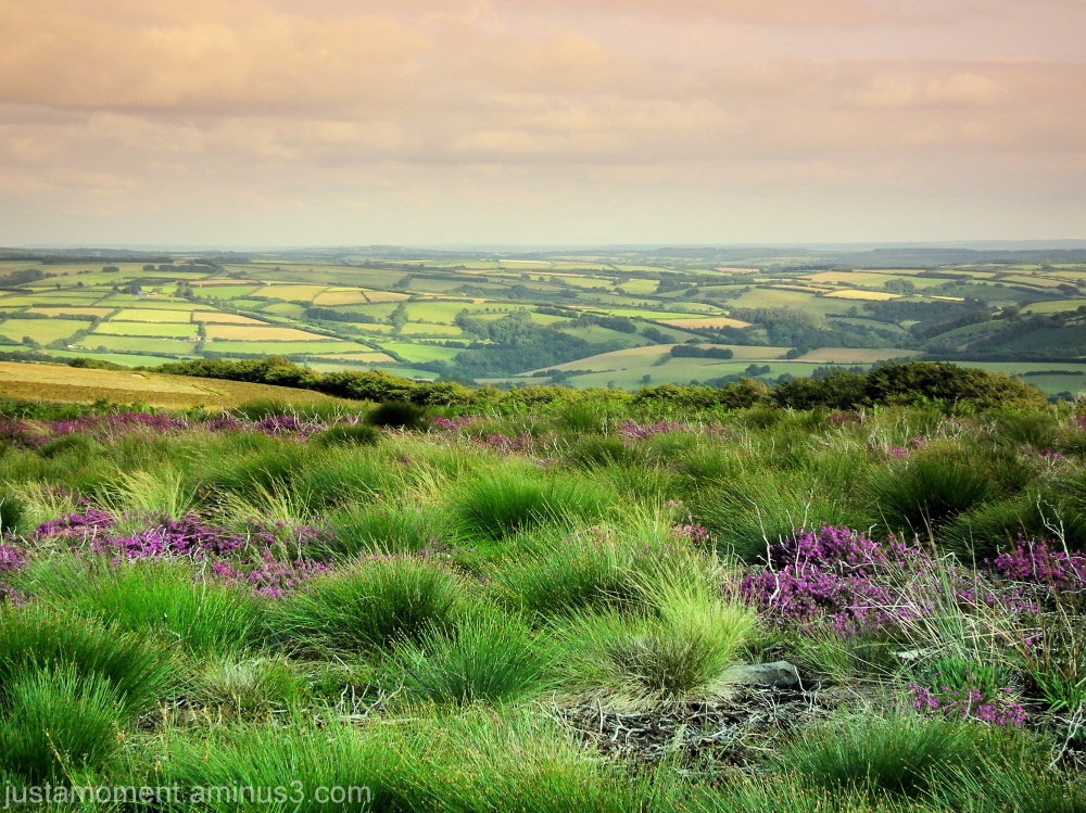 Grass, heather and green fields.