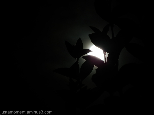 By the light of the moon - 2