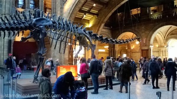 Natural History Museum, London.