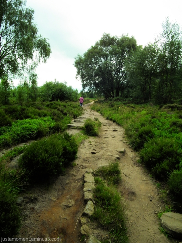 Path on the moor.