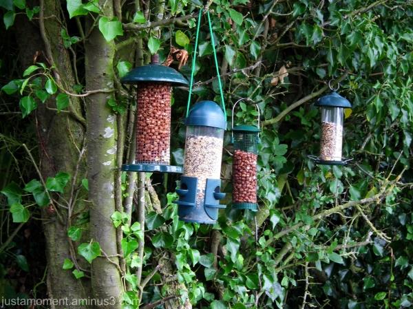 Bird Cafe.