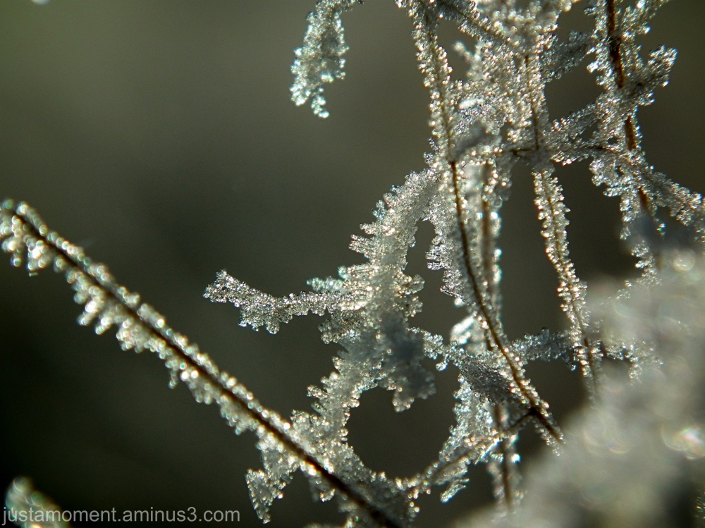 Frosted Nature.