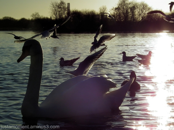 Attenborough Nature Reserve.