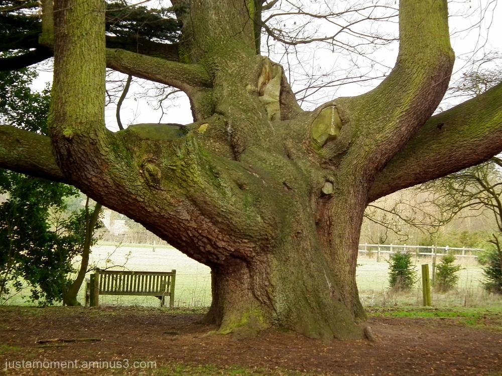 Fat tree.