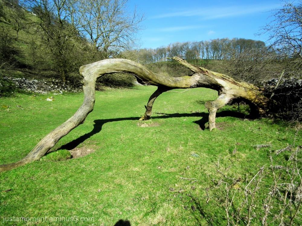 """Nicknamed """"The Dinosaur Tree"""""""