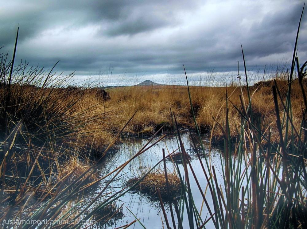 Marsh puddle.