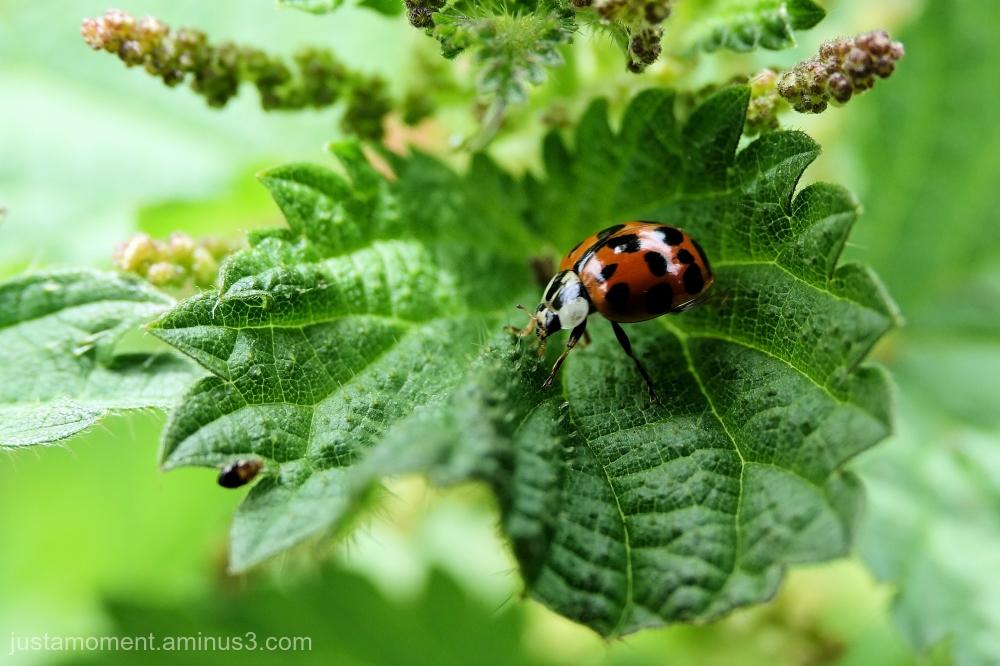 Ladybird.