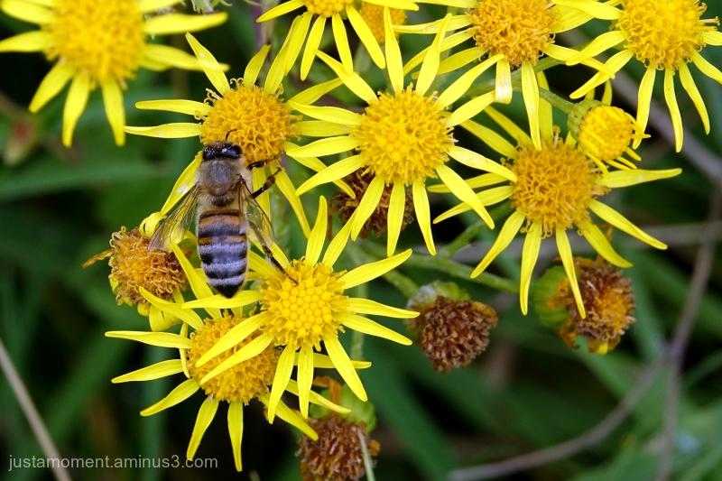 Yellow Bee.
