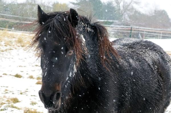 Snowy Bob.