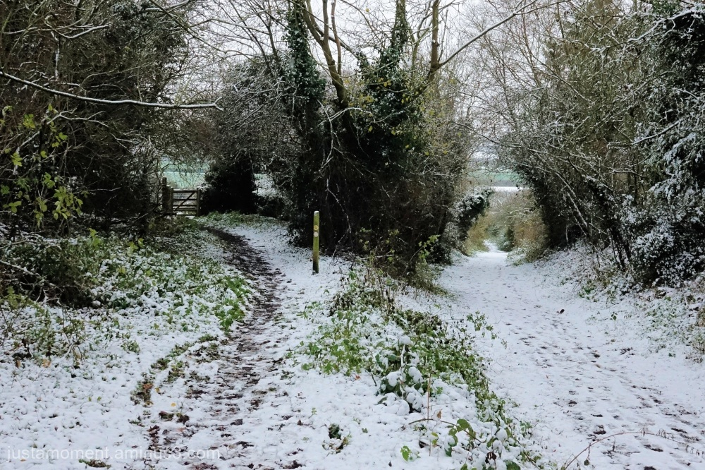 Snow on the bridle path.