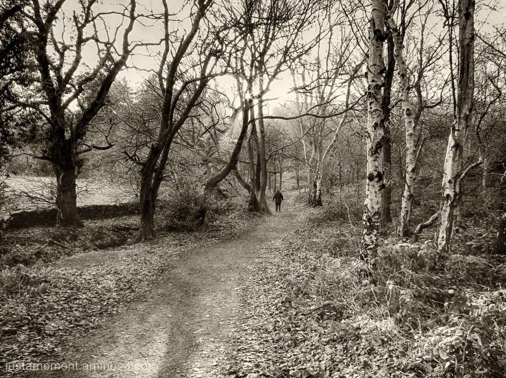 Walking the Outwoods.