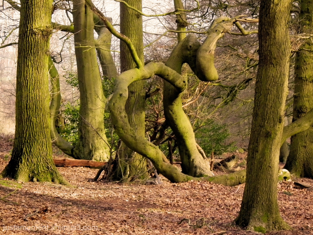 Twisted Nature.
