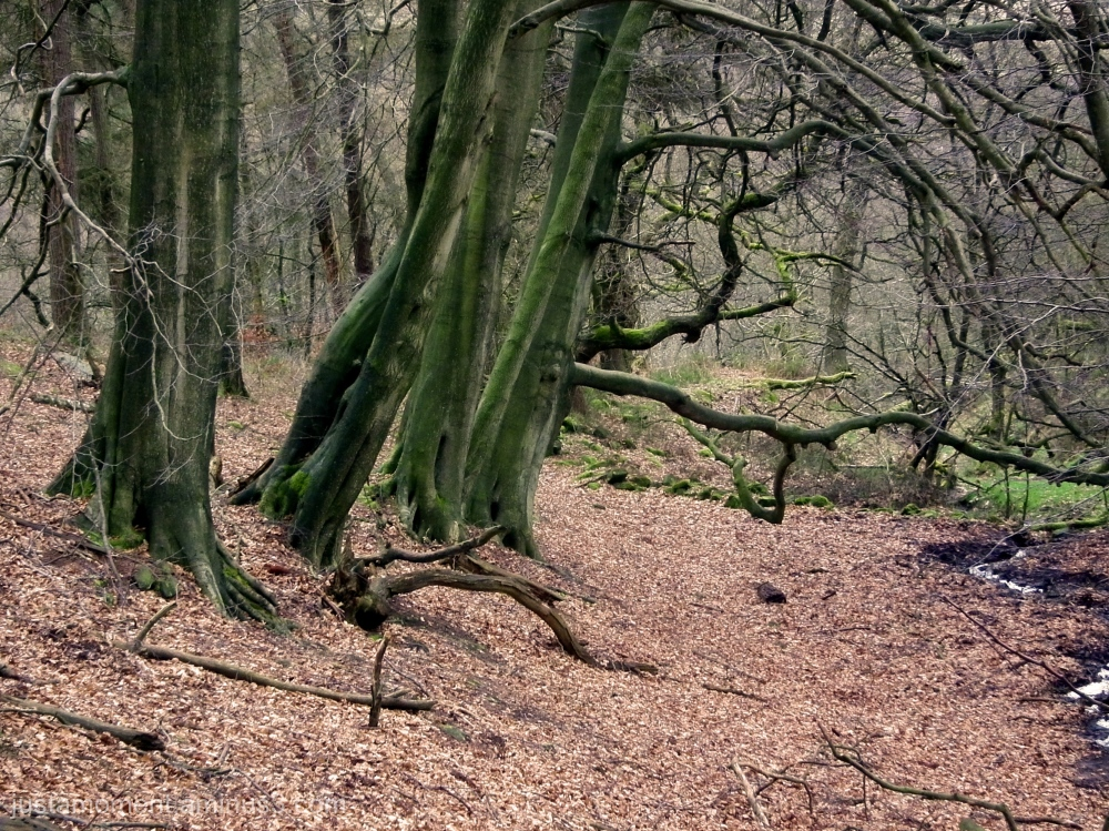 Can't beat a walk in the woods.