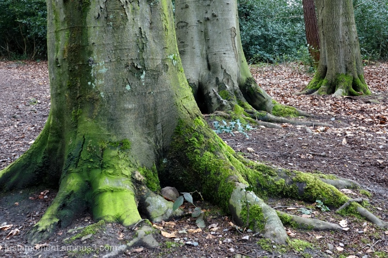 Well rooted.