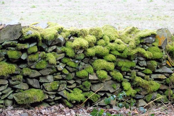 Drystone wall.