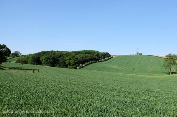 Crops.