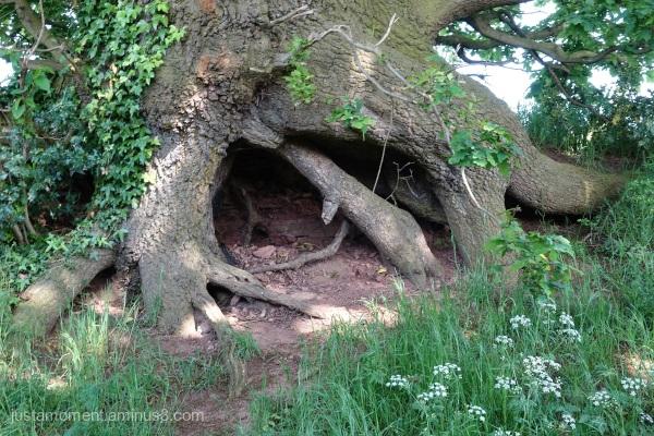 Tree cave.