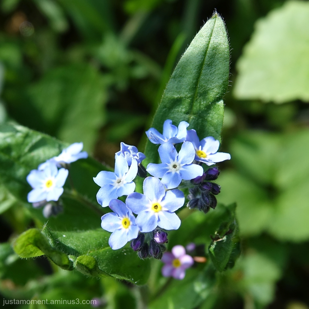 Little blue flower.