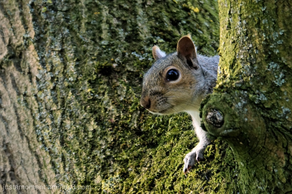 Cheeky little squirrel.