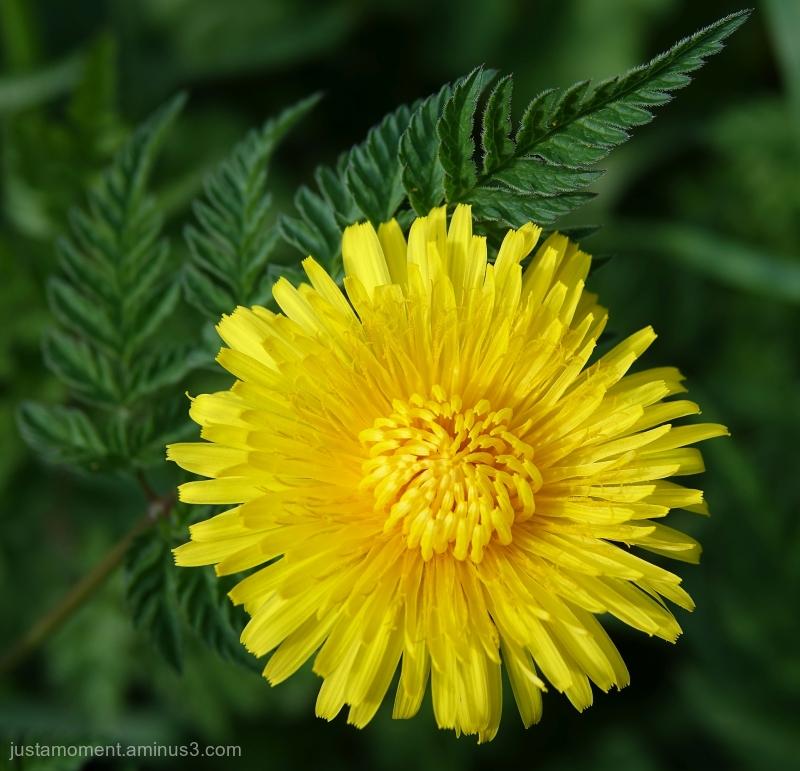 Sunshine in a flower.