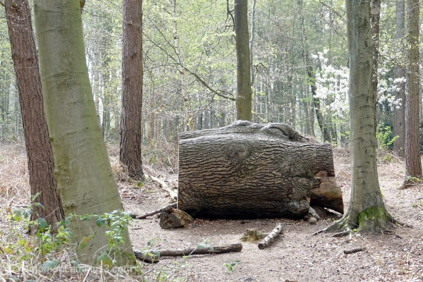 Big log.