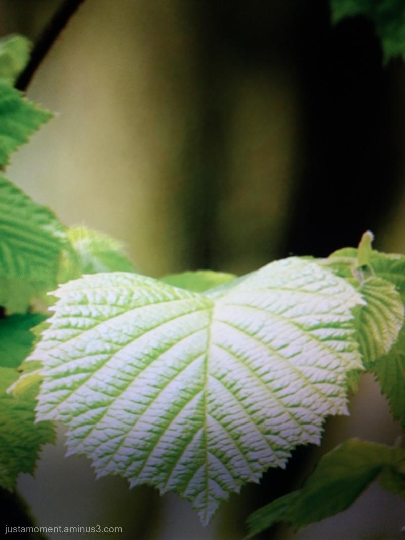 Leaf.Leaf