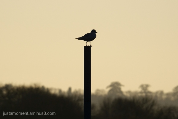 Perched on a post.
