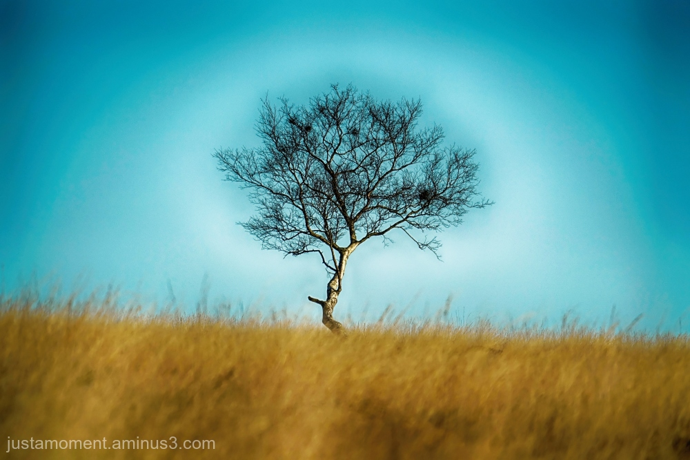 Lonely tree.