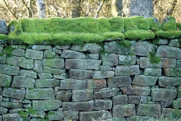 Moss topped wall.