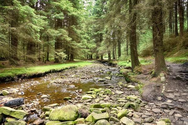 The River Ashop, Snake Wood.