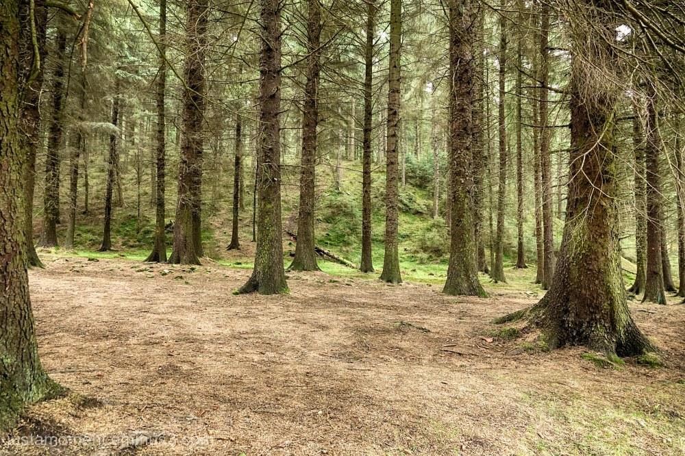 Snake Wood.