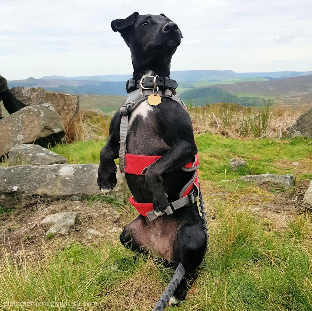 Ebbs on lookout
