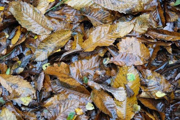 Wet leaves.