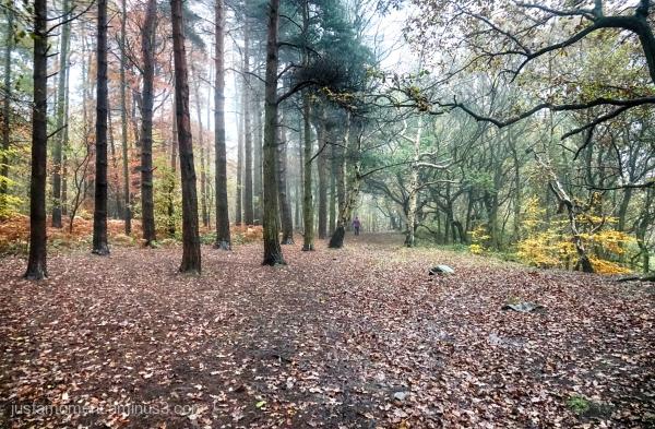 Walk in the woods.