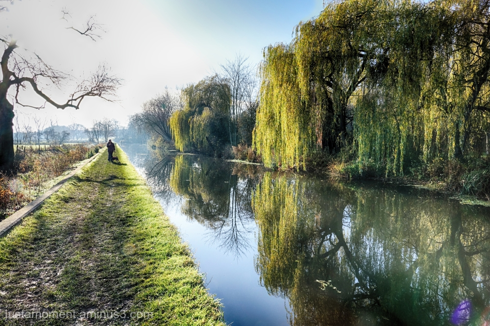 Willows on the River Soar.