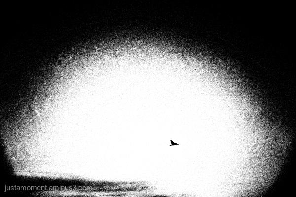 Fly away.