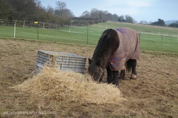 Hay box.
