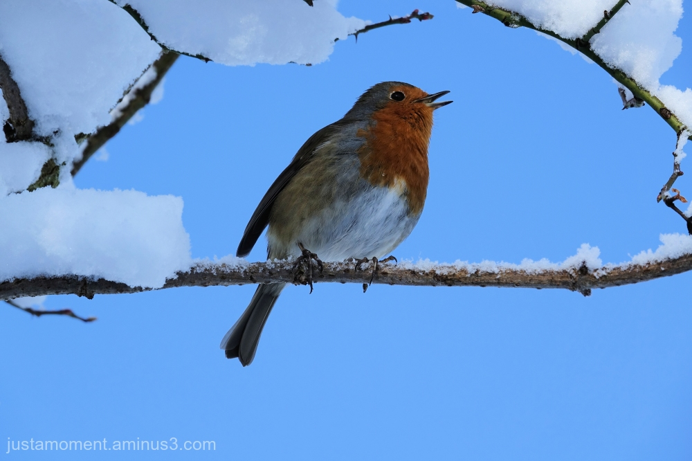 And another Robin.