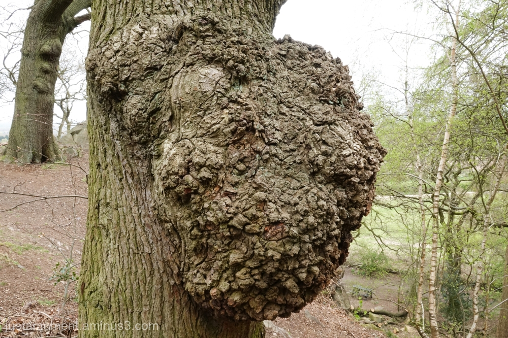 Large Gall