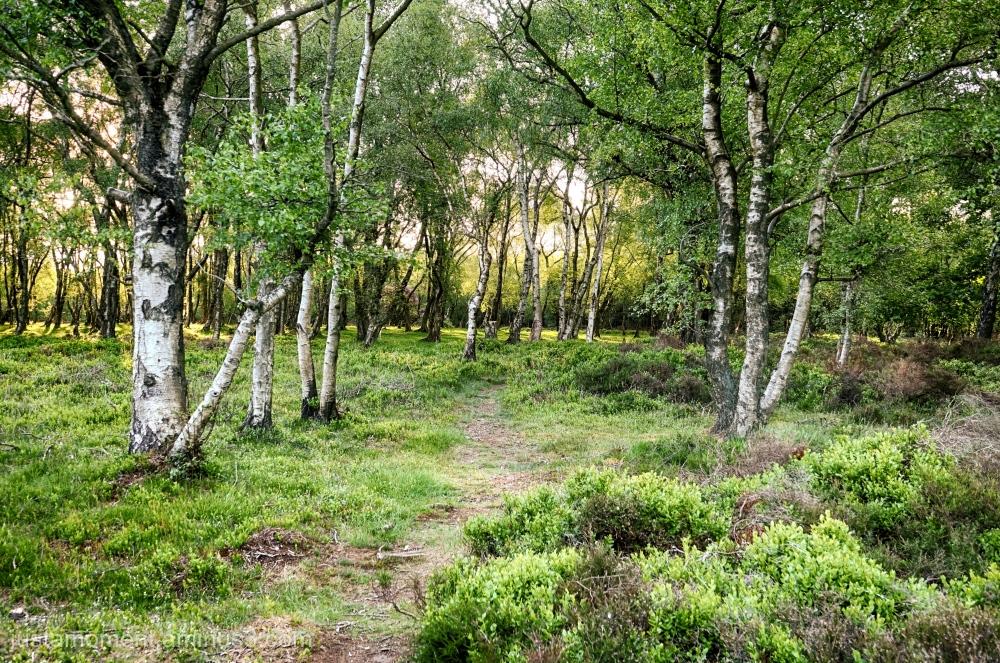 Side path.