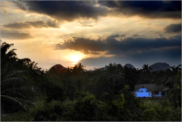 Bleue dans la jungle rougie
