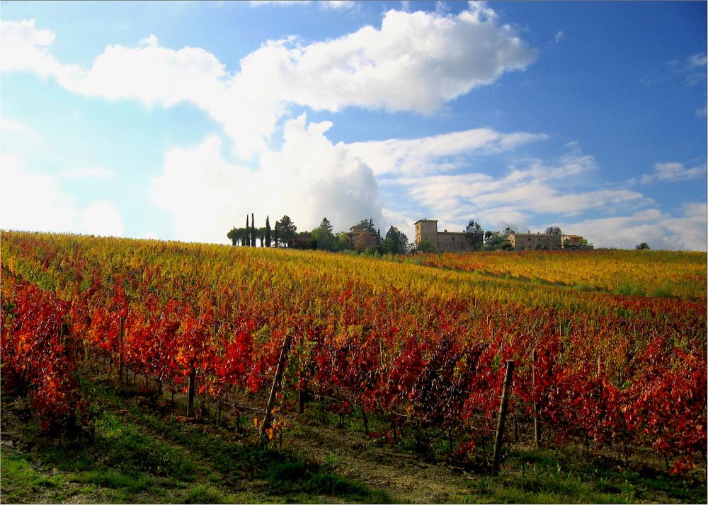 Cru Toscan d'automne