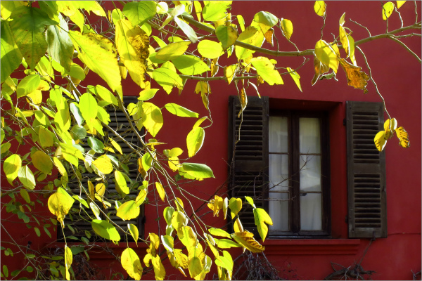 L'automne à sa fenêtre