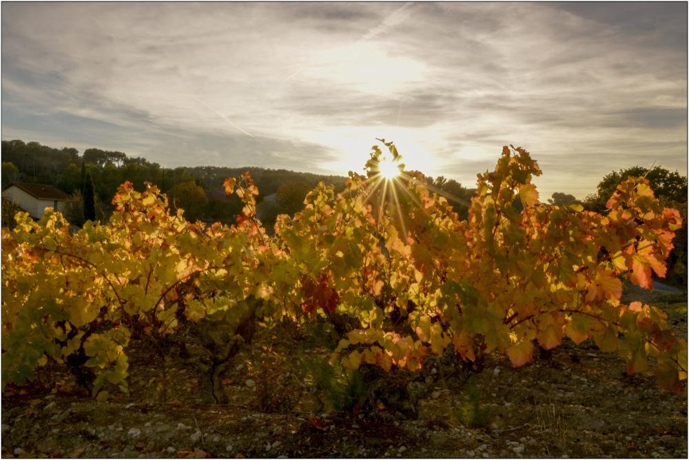 Déclin sur les vignes