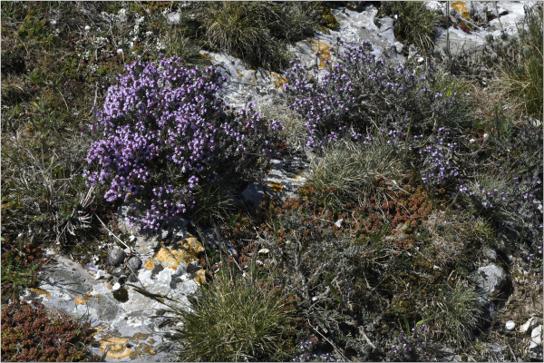 Floraison Provençale (2)