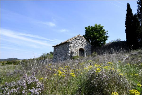 Floraison Provençale (3)