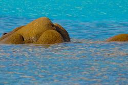 La tortue du lagon