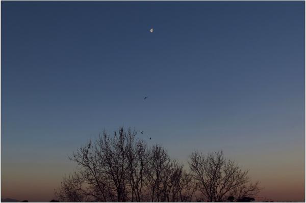 Perchoir sous la lune