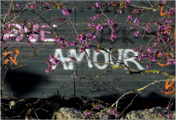 L'amour en fleurs