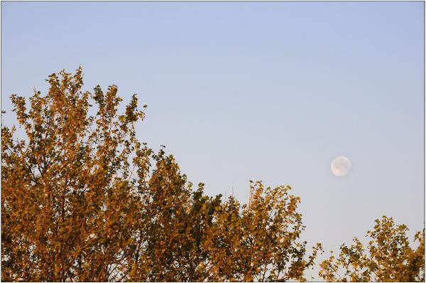 Le berceau de la lune